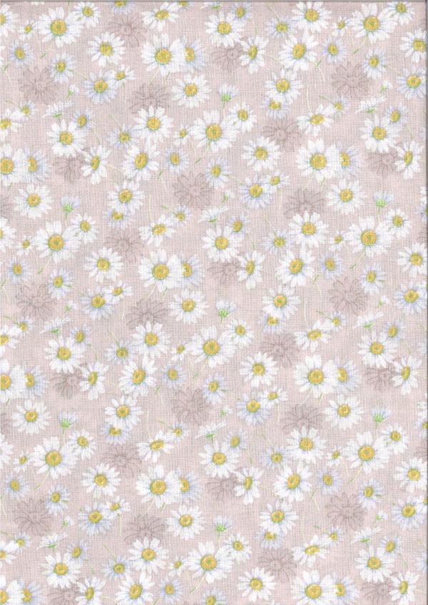 sa-aster-rose-poudre-coton